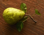 ripe pear on stalk with leaves
