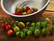 tomatoes in colander green and red being washed