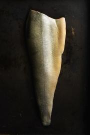 food photography salmon arctic char skin side up