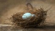 Bluebird eggs in nest
